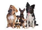 Hundehaftpflicht für mehrere Hunde