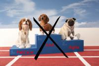 Hundekrankenversicherung Testsieger 2011