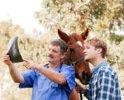 Pferde-Op Versicherung für Diagnostik