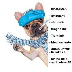 Uelzener Hunde-Op Versicherung Leistungen