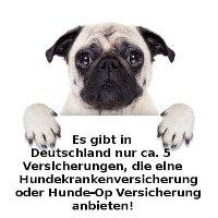 Hunde-OP Versicherung Angebote