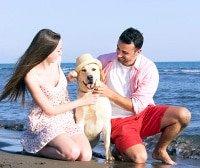 Hunde-Op Versicherung im Ausland