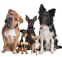 Hundekrankenversicherung Leistungen