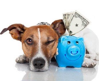 Hunde-Op Versicherung vergleichen