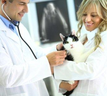 Katzen-Op Versicherung