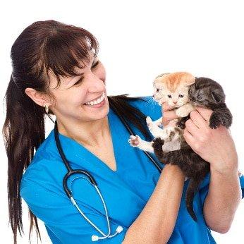 Verbrauchertest-Online - Katzenkrankenversicherung