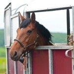 kurzfristige Pferdeversicherung