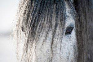 Pferde-Op Versicherung Leistungen