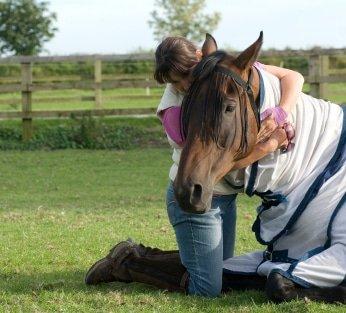 Pferde-Op Versicherung Vergleich