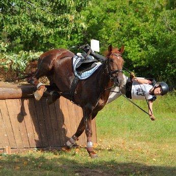 Pferdehaftpflichtversicherung regional