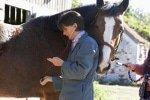 ungPferdekrankenversicherung für Tierarztbehandlungen