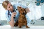 Hundekrankenversicherung für Tierarztbehandlungen