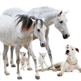 Tierversicherung Sitemap