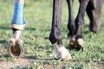 Pferde-Op Versicherung für Unfälle