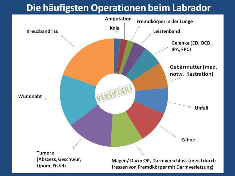 Top Ten Operationen beim Labrador