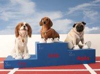 Hunde-Op Versicherung Testsieger
