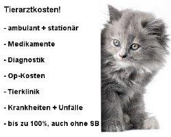 Katzenkrankenversicherung Leistungen