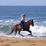 Pferdehaftpflicht für Ausland