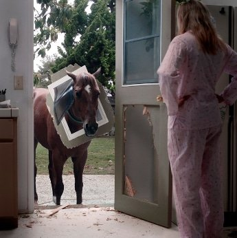 Pferdehaftpflicht Mietsachschäden