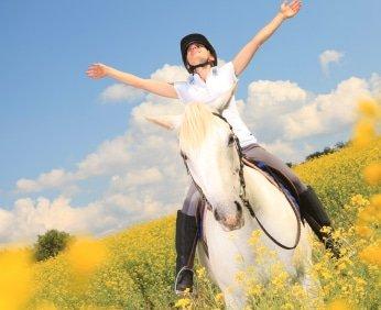 Pferdehaftpflicht Testsieger