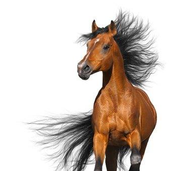 Pferdeversicherung Vergleich