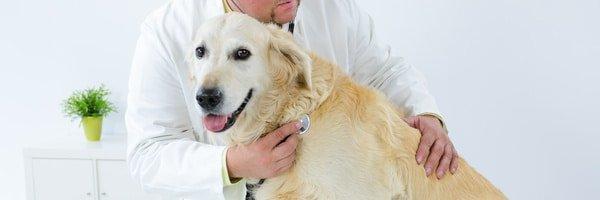 Tierarztkosten beim Hund