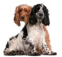 Uelzener Hunde-OP Versicherung Tarife