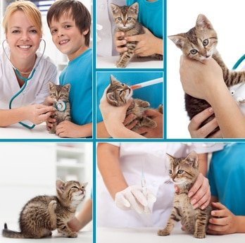 Katzen Krankheiten und Operationen