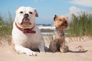 Hundehaftpflicht im Ausland