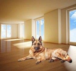 Hundehaftpflicht Mietsachschäden