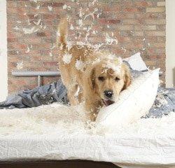 Hundehaftplicht Schaden