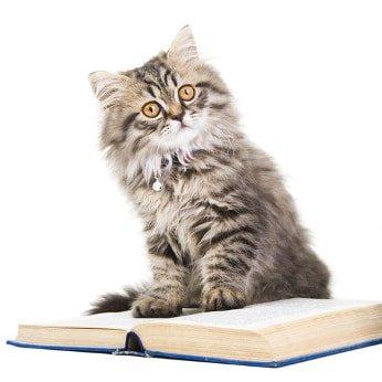 Katzen-Op Versicherung Lexikon