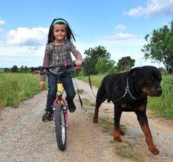 Familienmitglieder in der Hundehaftpflicht