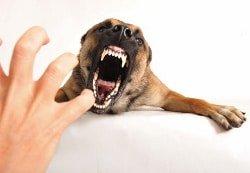 Vom Hund gebissen