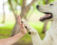 Uelzener Hundekrankenversicherung