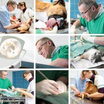 Hunde-Op Versicherung Krankheiten