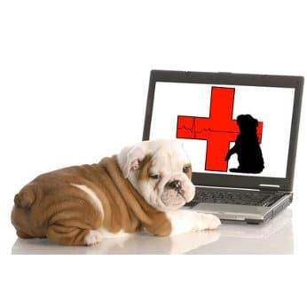 Tierkrankenversicherung für Hunde