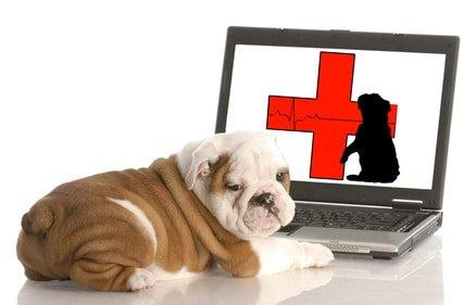 Hundekrankenversicherung Statistik