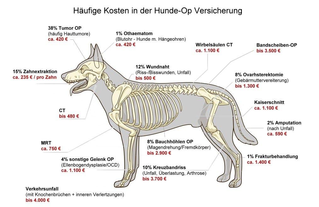Die häufigsten Operationen beim Hund