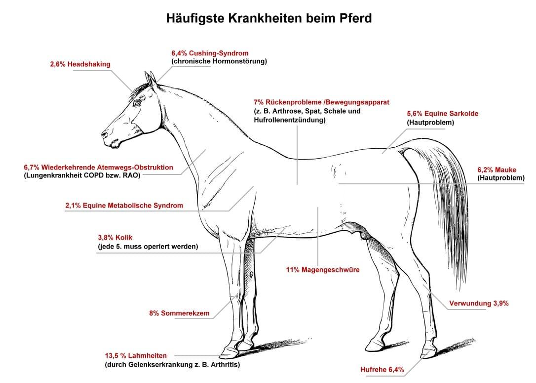 Die häufigsten Krankheiten beim Pferd