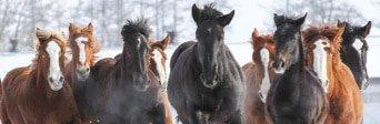 Pferdehaftpflicht Vergleichsrechner