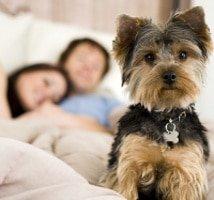 Hundekrankenversicherung ohne Selbstbeteiligung