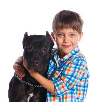 Günstige Kampfhundehaftpflicht
