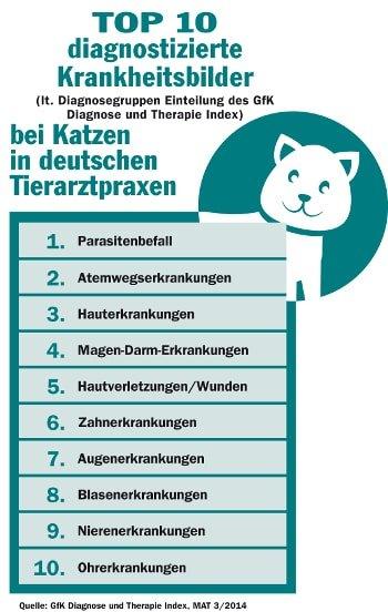 Die häufigsten Tierarztkosten bei der Katze