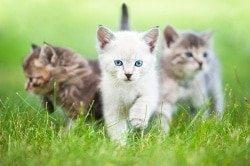 Katzenkrankenversicherung für Freigänger Katzen