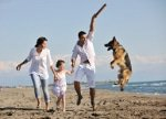 Hunde-OP Versicherung für Gelenkerkrankungen