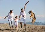 Gelenkbelastung beim Hund kann teuer werden