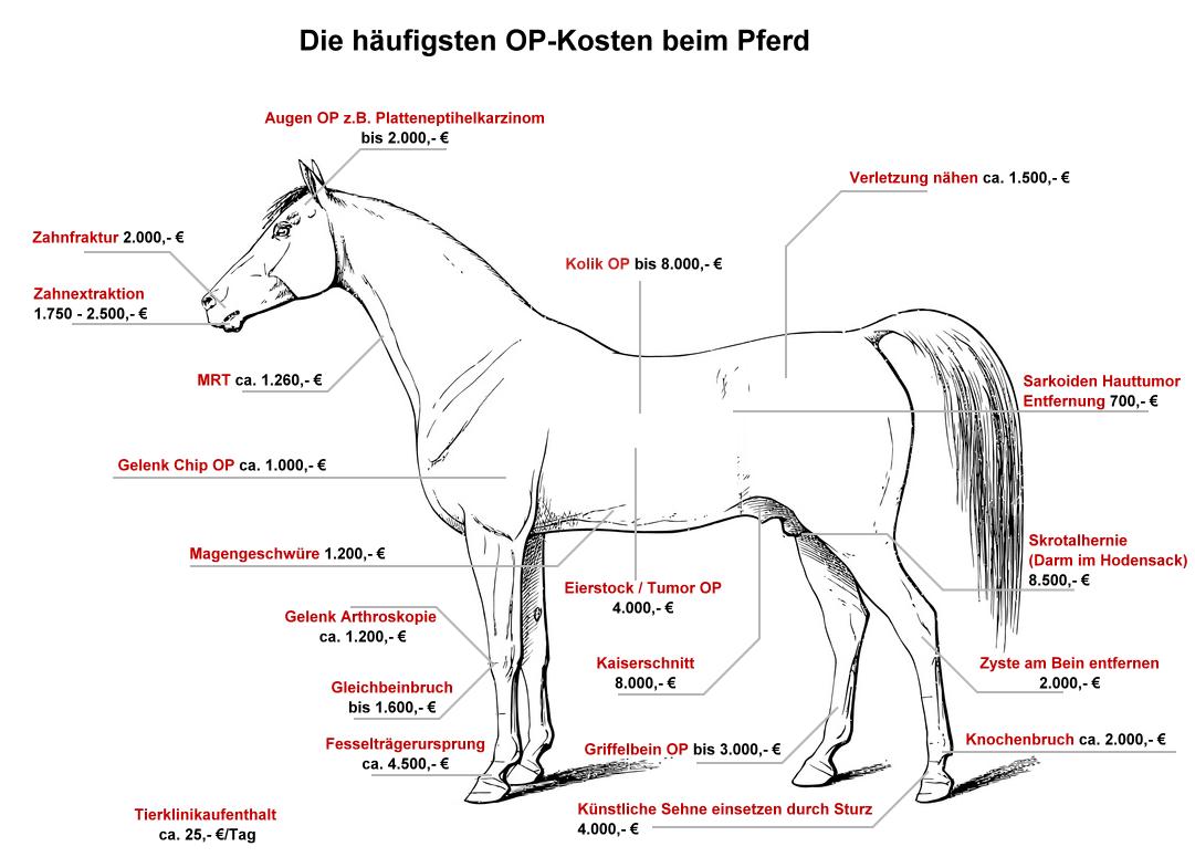 Die häufigsten OP-Kosten beim Pferd