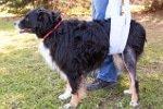 Hunde OP Versicherung für Kreuzbandriss