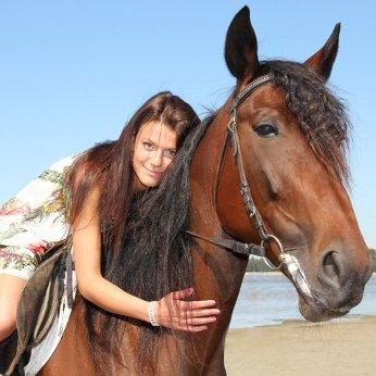 Pferdekrankenversicherung Vergleich